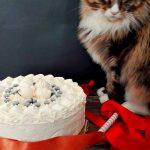 Bignè e la meringata, il gatto e la torta